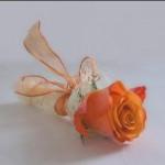Rose-150×150