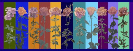 Rosenbilder-kompr